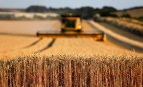 Названы крупнейшие владельцы сельхозземель в России