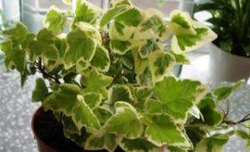 Ученые назвали домашнее растение, которое предотвращает развитие рака
