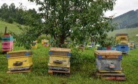 Гордеев поручил устранить названную причину массовой гибели пчел