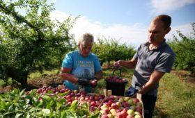 Минэкономразвития назвало условия признания бизнеса семейным