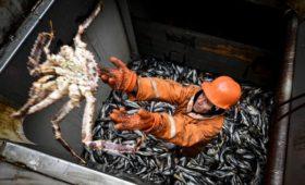 Правительство решило не распределять квоты на вылов рыбы через аукционы