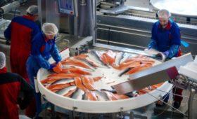 «Русская аквакультура» восстановила бизнес после гибели рыбы