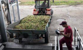 Крым расторг инвестсоглашение по строительству нового крупного винзавода