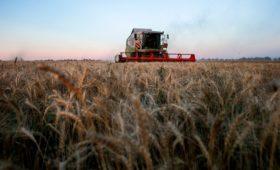 ВТБ попросил у Путина помощи в создании российского зернового лидера