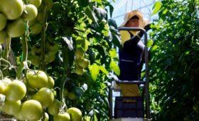 Вексельберг продаст сельскохозяйственный бизнес