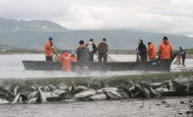 Лосось в России резко подорожал из-за снижения улова