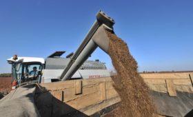 ФАС после жалоб на цены возбудила дела против двух поставщиков гречки