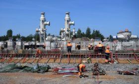 Экологи увидели в строительстве «Северного потока-2» угрозу для уток