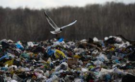 Россияне назвали загрязнение природы угрозой страшнее терроризма
