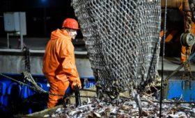СМИ узнали о возможной потере $350 млн рыболовами из-за карантина