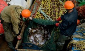 Рыбаки предупредили о риске остановки промысла в Баренцевом море